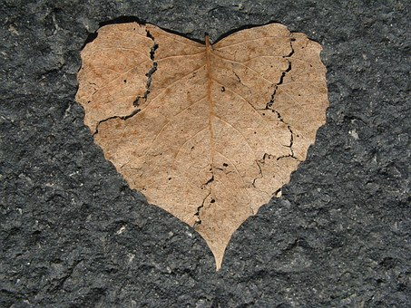 heart-742712__3401