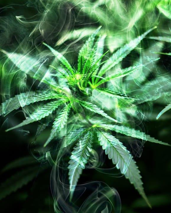 cannabis-2186917_960_7201
